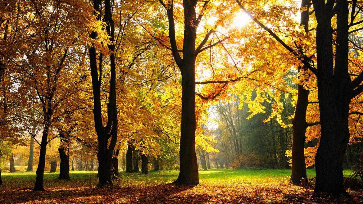 Herbst hintergrund windows 10