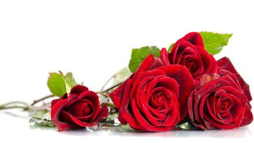 Am Valentinstag besonders beliebt: rote Rosen