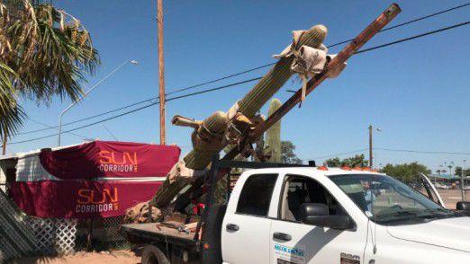 Werben für mehr Aufmerksamkeit. Die Wüstenstadt Tucson bewirbt sich für das Amazon HQ2 (Headquarter2) und schickte Amazon einen über sechs Meter hoher Saguaro-Kaktus.