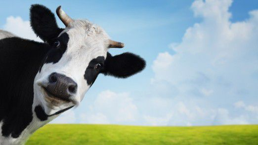 Die Milchpreise in Deutschland haben unmittelbare Auswirkungen auf den Bestand der Tiere.